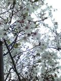 2010_0411-2.jpg