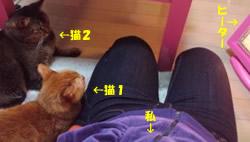 2010_0109-2.jpg
